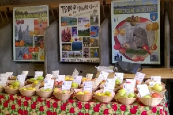 EXPOSITION de fruits par l'association  « Les croqueurs de pomme »